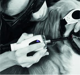 laser therapy vet oral pathologies