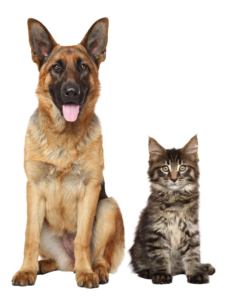 Cat and Dog Sitting